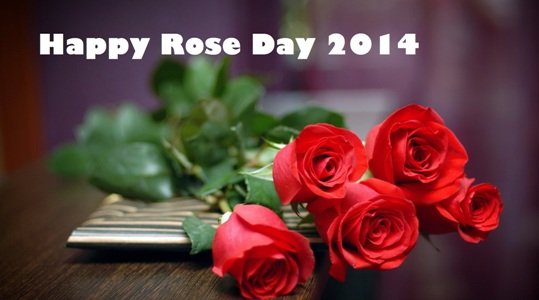 rose day 13