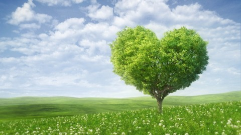 10 Awesome Inspiring Happy Love a Tree Day 2014 Images, Greetings, Wallpapers