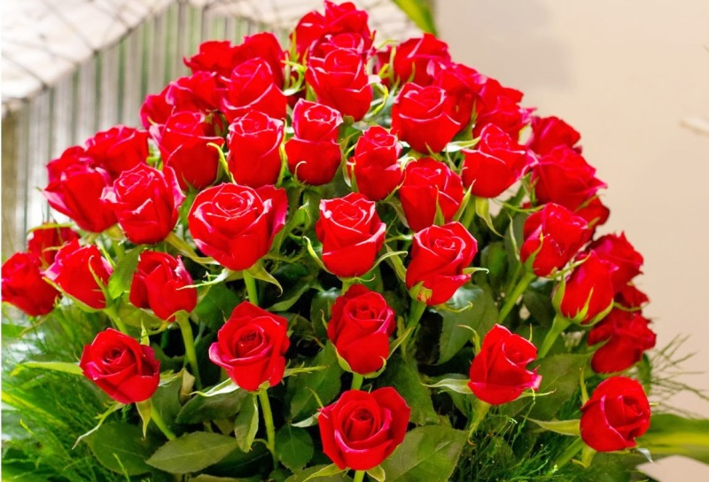 Happy Red Rose Day 2014 Hd Images Greetings Wallpapers Free