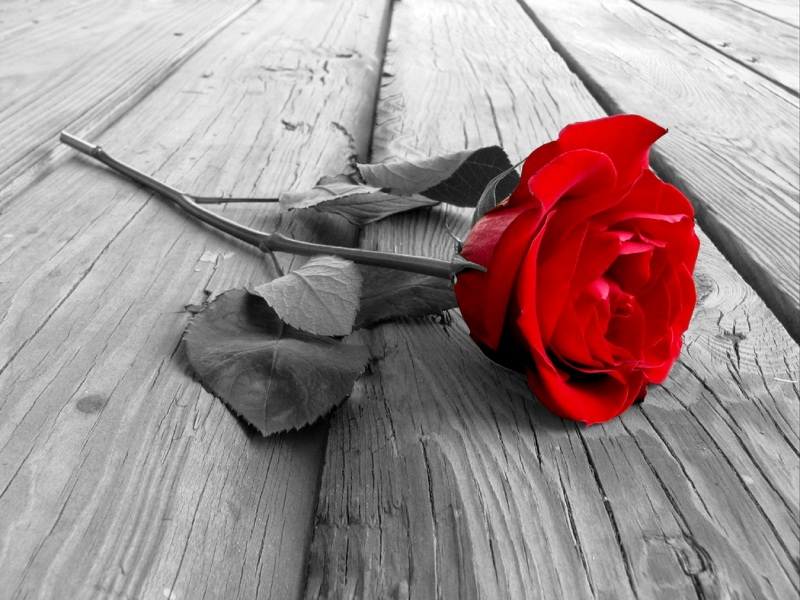 Red Rose Day 2014 SMS, Wishes, Messages, Greetings In English