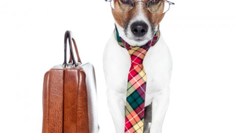 2014 Take Your Dog to Work Day Facebook Greetings, WhatsApp HD, Images, Wallpapers, Scraps For Orkut