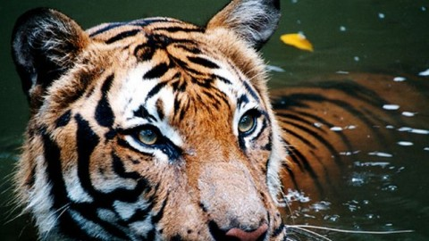 How Indian Wildlife Is Much More Fascinating Than You Could Imagine