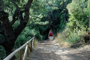 spain-andalucia-walking-along-shaded-path
