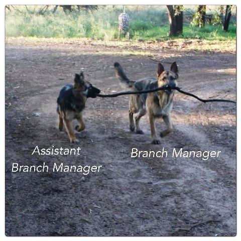 Assistant-branch-manager