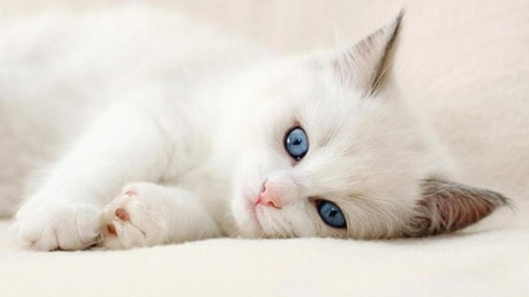 Happy International Cat-Day 2014 HD Images, Pictures, Greetings, Wallpapers Free Download