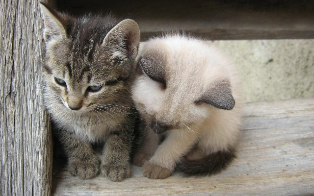 World Cat-Day Photos, Images, Wallpapers 2014