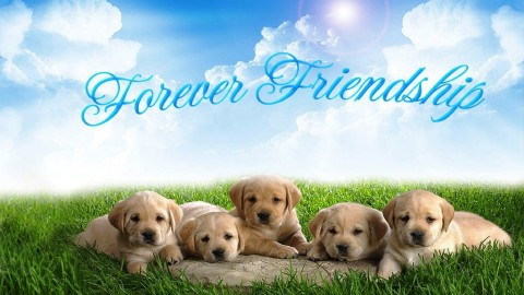 Happy Friendship Day 2014 HD Wallpapers, 3D Greeting Cards, Facebook Photos, WhatsApp Images Free Download