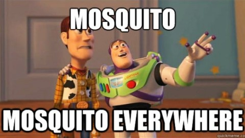 World Mosquito Day 2014 HD Images, Greetings, Wallpapers Free Download