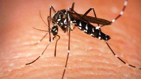 World Mosquito Day 2014 HD Images, Pictures, Greetings, Wallpapers Free Download