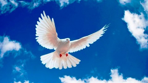 Happy International Day of Peace 2014 HD Images, Greetings, Wallpapers Free Download