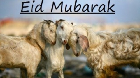 Eid ul-Adha 2014 HD Images, Wallpapers For Whatsapp, Facebook