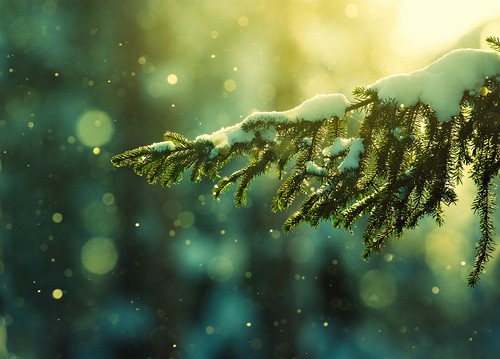 Look For An Evergreen Day  (1)