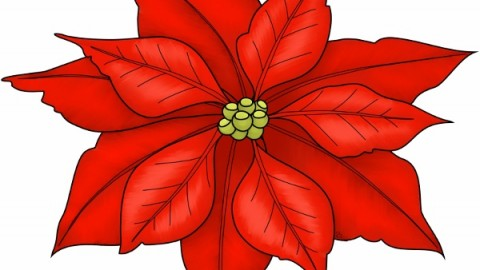 2014 Poinsettia Day Facebook Photos, WhatsApp Images, Wallpapers, Pictures