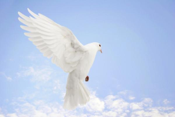 World Day Of Peace  (1)