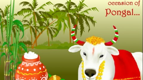 Advance Happy Pongal 2015 Images Tamil SMS, Wishes, WhatsApp Status