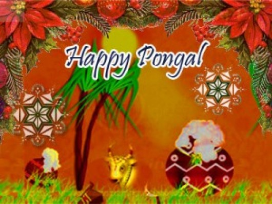 Happy Pongal Wallpapers  (7)