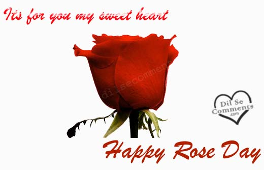 Rose Day Wallpapers Bms Bachelor Of Management Studies