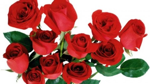 Top 3 Awesome Happy Rose Day 2015 Images, Pictures, Photos, Wallpapers