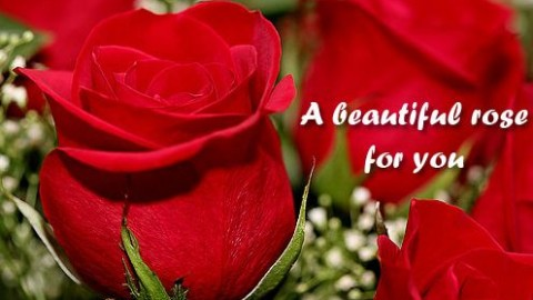2015 Rose Day Facebook Greetings, WhatsApp HD Images, Wallpapers