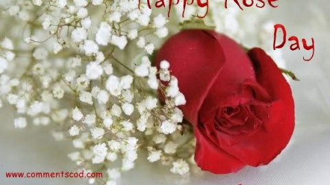 Rose Day 2015 Facebook Greetings, WhatsApp HD, Images, Wallpapers, Scraps