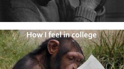 School life v/s College life – Which one do You Think is Best?
