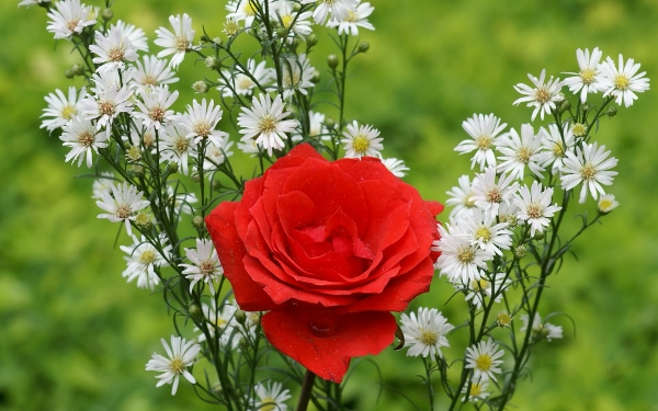 10 Awesome Beautiful Happy Red Rose Day 2015 Images, Wallpapers For Facebook