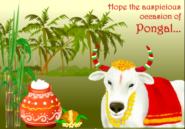 10 Amazingly Beautiful Happy Mattu Pongal 2014 Images, Greetings And Wallpapers