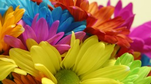 Colorful-Daisy-Flowers-Send-It-To-Your-Friends