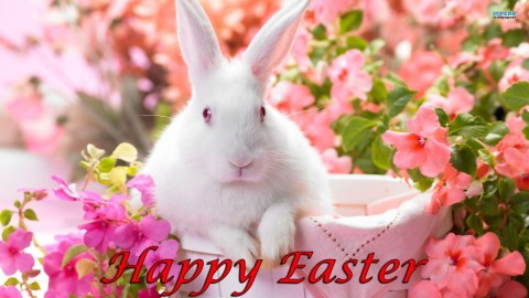 Happy Easter 2014 HD Pictures, Images, Photos, Wallpapers, Backgrounds, Scraps For Orkut, WhatsApp, Myspace, Facebook