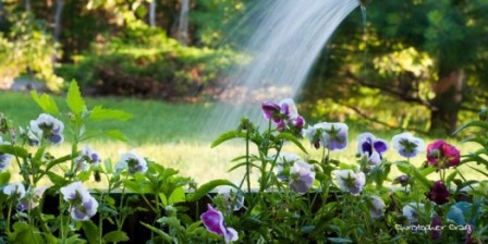 Happy Water a Flower Day 2014 Greetings, Wishes, Images, HD Wallpapers For WhatsApp, Facebook