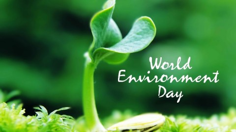 Happy World Environment Day 2014 HD Images, Wallpapers, Orkut Scraps, Whatsapp, Facebook