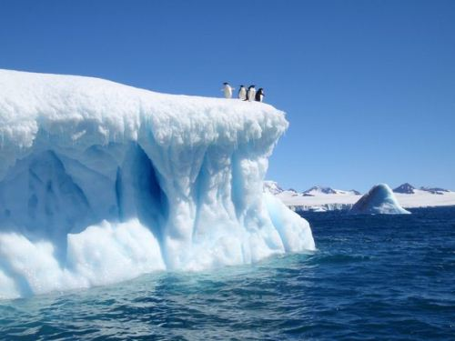 Antarctica-and-Penguin