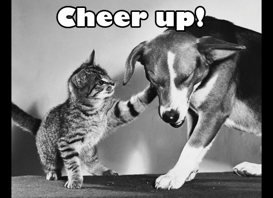 Cheer-up-silly-dog
