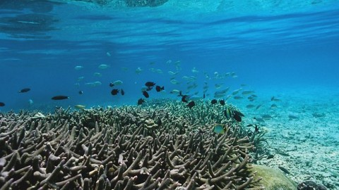 10 Best Island Reefs for Diving, Snorkeling and Exploring
