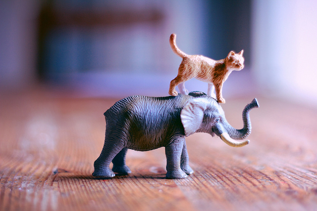 Awwww... Watch What Happens When This Adorable Baby Elephant Meets a Cat for the First Time