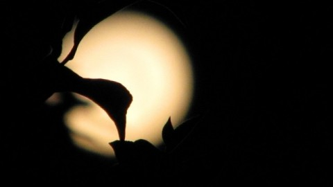 2014 August Full Moon Day HD Images, Wallpapers For Whatsapp, Facebook