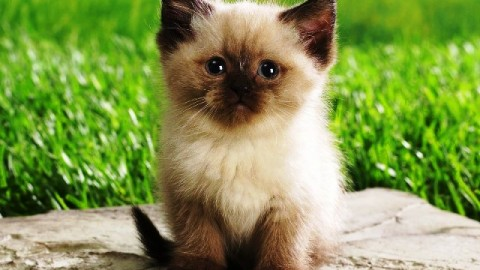 2014 World Cat-Day Facebook Greetings, WhatsApp HD Images, Wallpapers