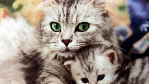 2014 World Cat-Day HD Images, Wallpapers For Whatsapp, Facebook