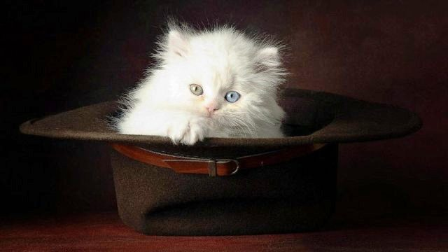 Top 10 Amazingly Cute Happy World Cat-Day 2014 Images, Wallpapers, Photos, Pictures For Facebook And WhatsApp