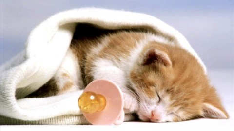 Happy World Cat-Day 2014 HD Wallpapers, Images, Wishes For Pinterest, Instagram