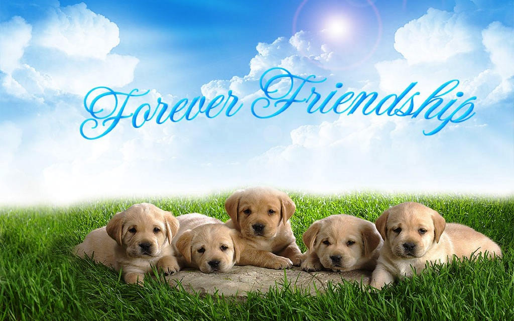forever_friendship_cute_puppy_wallpaper