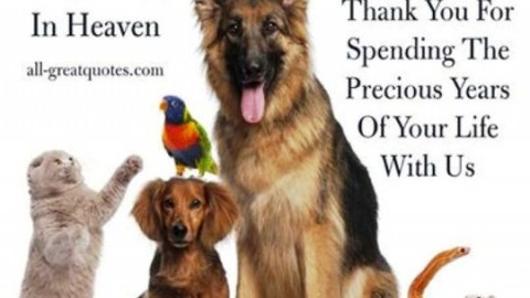 Top 3 Awesome National Pet Memorial Day 2014 Images, Pictures, Photos, Wallpapers