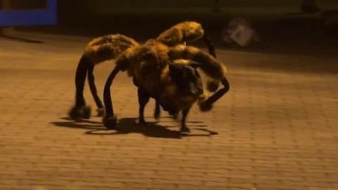 Watch Scary Mutant Giant Spider Dog Prank