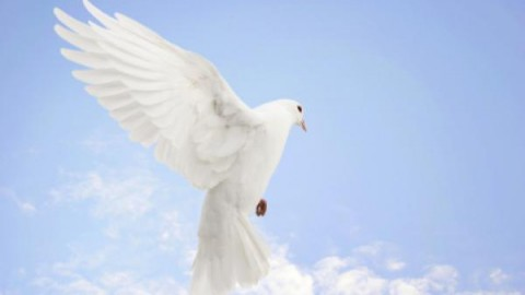 2014 World Peace Day Free HD Pictures, Images, Wallpapers, Greeting Cards For Facebook, Myspace, WhatsApp