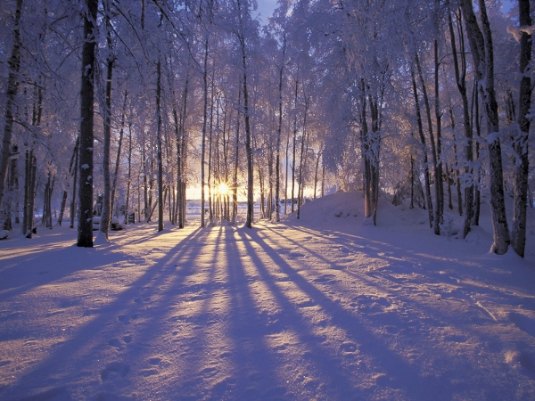 Winter Solstice  (2)