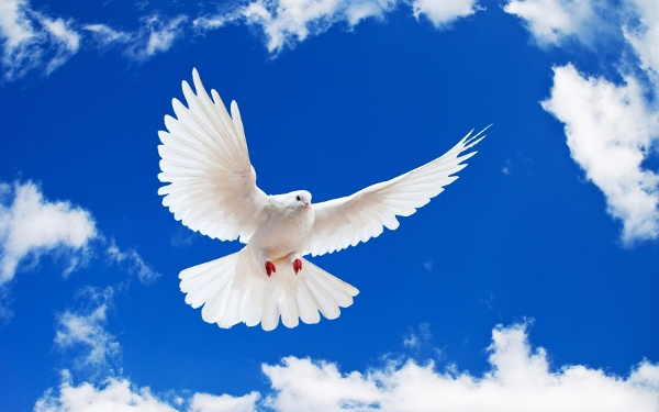 World Day Of Peace  (4)