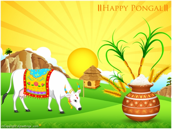Happy Pongal 2015 HD Wallpapers, Pics For Facebook, WhatsApp