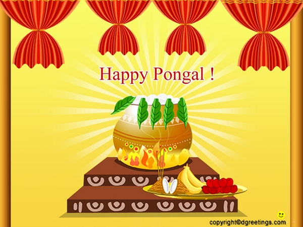 Happy Pongal Wallpapers  (4)