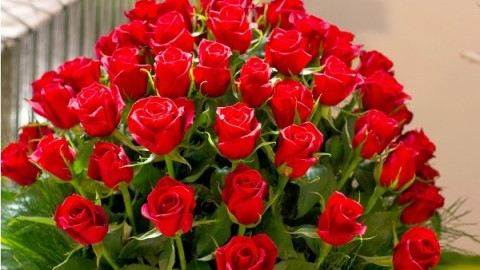 Top 5 Amazingly Beautiful Happy Rose Day 2015 Images, Wallpapers, Photos, Pictures For Facebook And WhatsApp