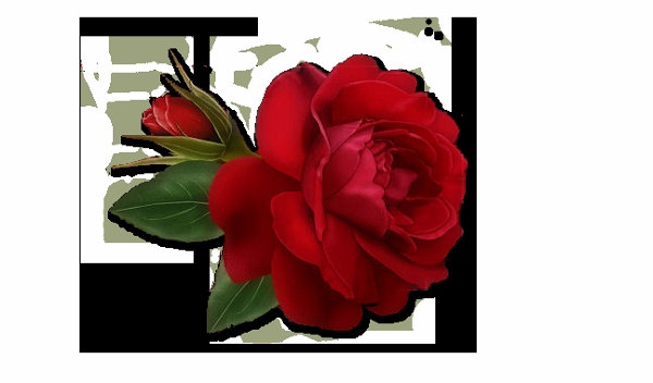 Red Rose Day 2015 Images (13)